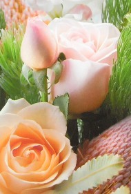 ONE $ KOALA CARD - FLOWERS