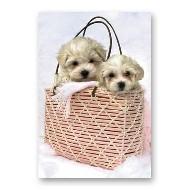ONE $ KOALA CARD - BAG PUPPIES