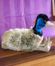 EMU - SHEILA
