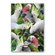 ONE $ KOALA CARD - AUSSIE BIRDS