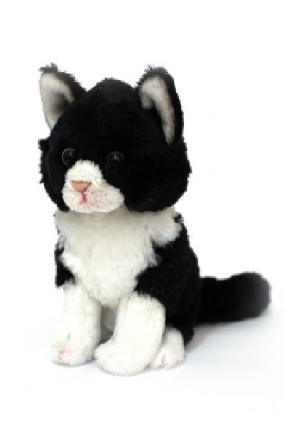 CAT - MILA JNR