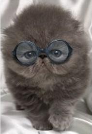 ONE $ KOALA CARD - COOL CAT