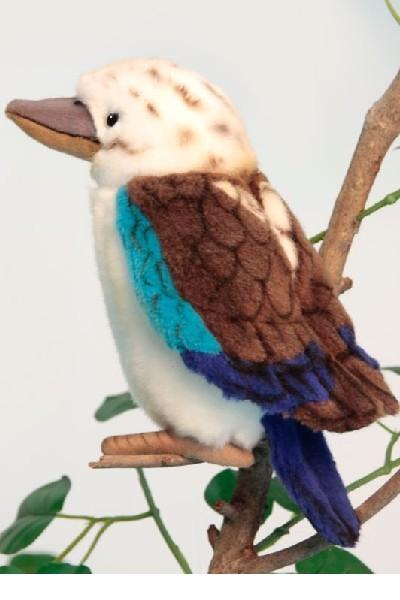 KOOKABURRA - BLUE WINGED