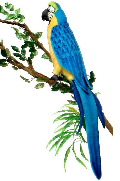 MACAW - BLUE GOLD