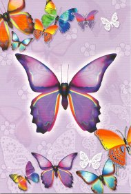 ONE $ KOALA CARD - BUTTERFLYS