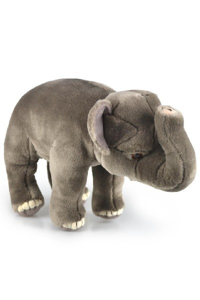 ELEPHANT - ASIA