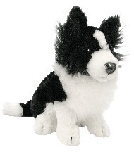 BORDER COLLIE - MATEY