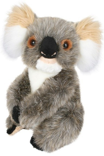 KOALA - LITTLE ADELAIDE