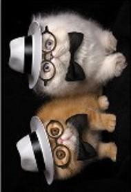 ONE $ KOALA CARD - WISE CATS