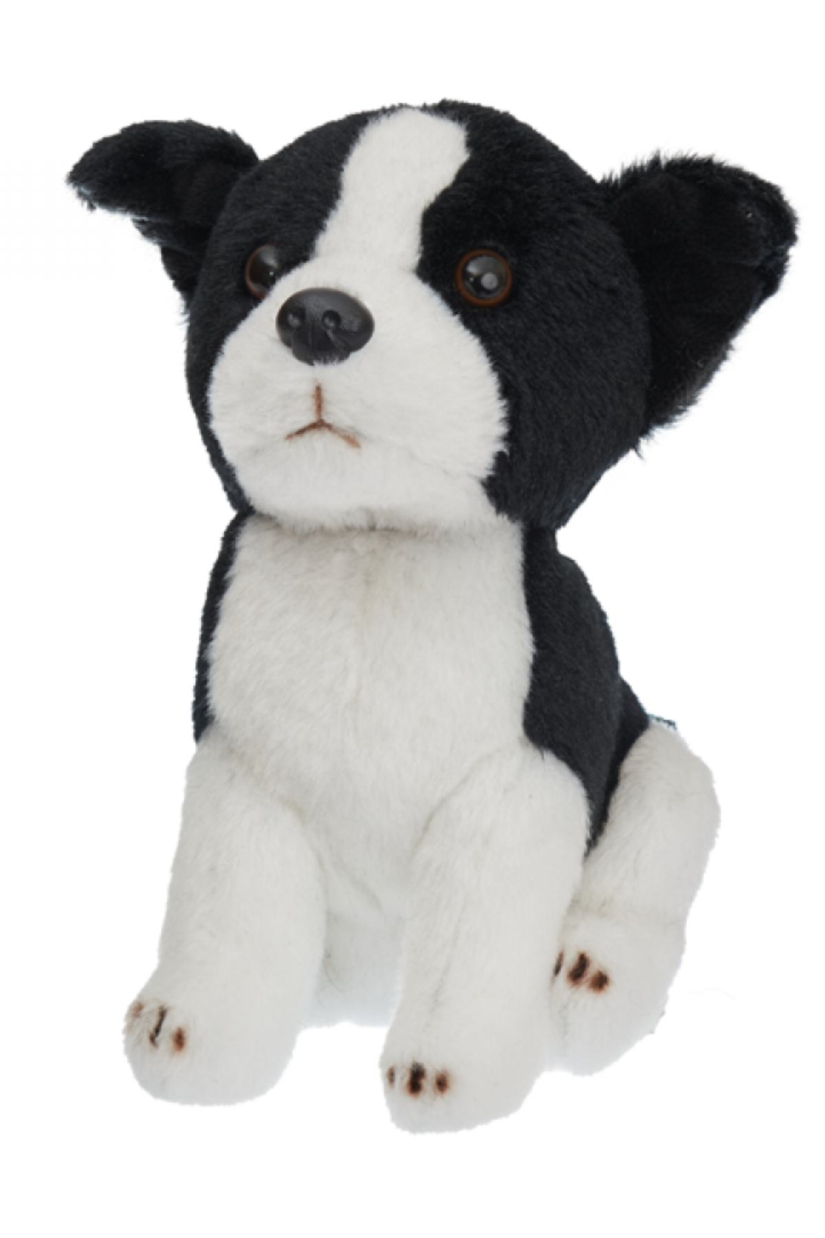 TILLY BORDER COLLIE